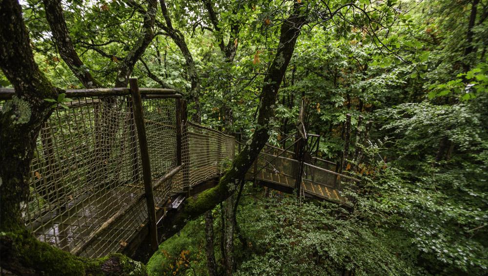 Stage ressourcement dans les bois de Mikinac