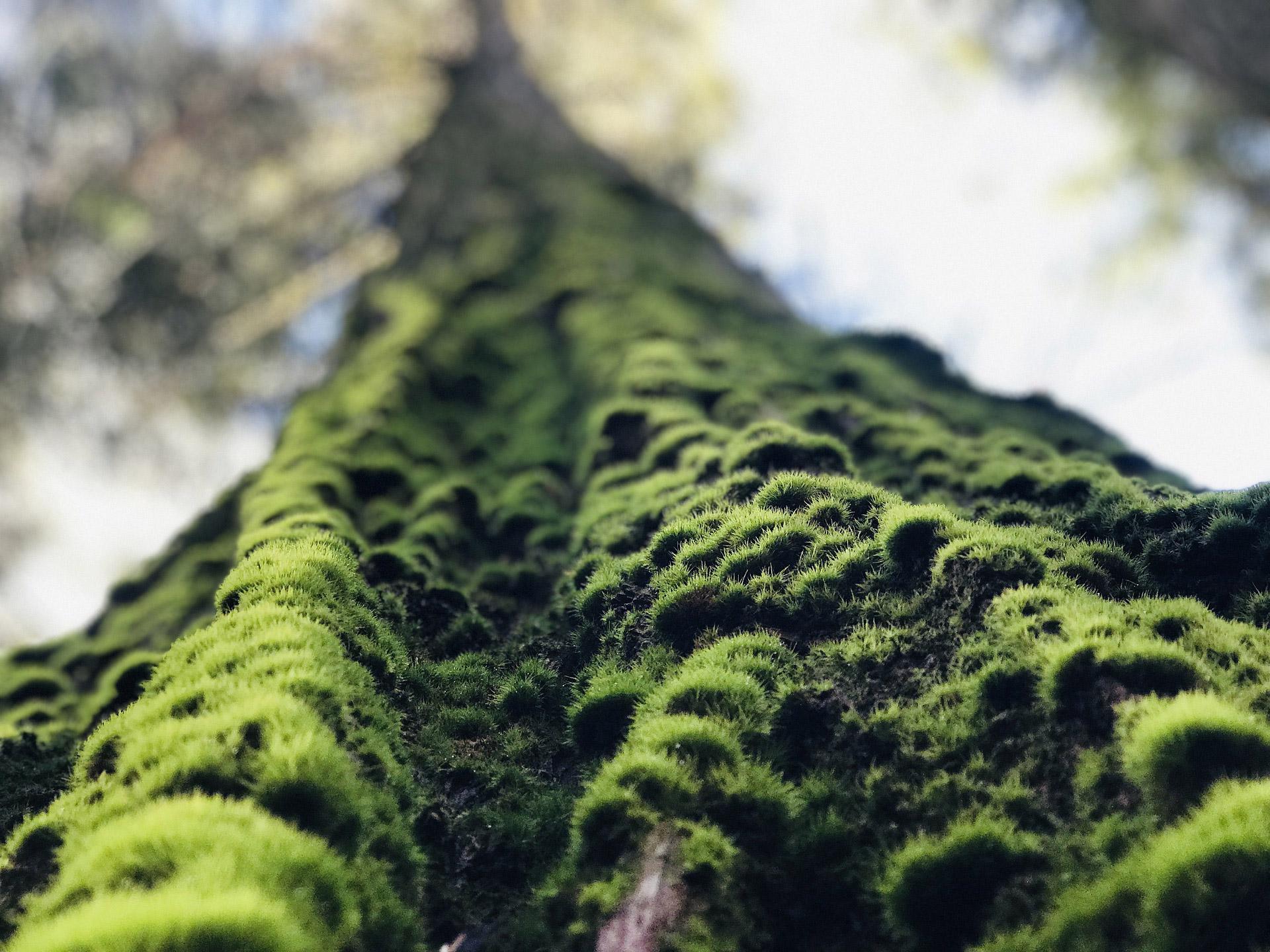 Les bois de Mikinac